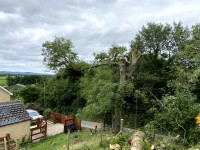 Tree pruning by Paul O'Donnell Tree Services, Donegal, Ireland