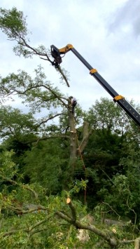 Crane holding tree branch after cutting by Paul O'Donnell Tree Services, Donegal, Ireland