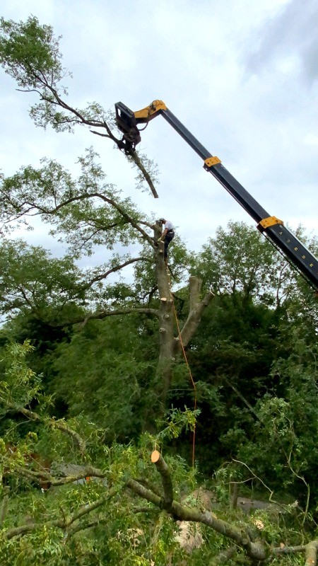 Caring for your Trees - Paul O'Donnell Tree Services, Co. Donegal, Ireland