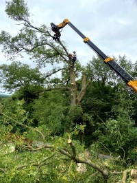 Crane holding tree branch during cutting by Paul O'Donnell Tree Services, Donegal, Ireland