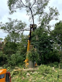 Crane lifting tree top after cutting by Paul O'Donnell Tree Services, Donegal, Ireland
