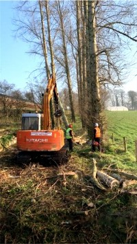 Shaping, trimming and prunings  - Paul O'Donnell Tree Services, Co. Donegal, Ireland