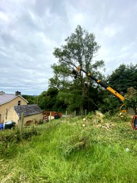 Paul O'Donnell Tree Services - preparing to remove tree branch, Donegal, Ireland