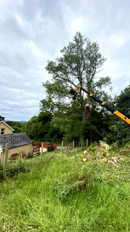 Paul O'Donnell Tree Services and Fencing, Co Donegal, Ireland